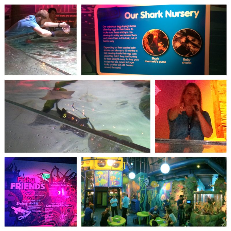 Shark nursery SEA LIFE Charlotte-Concord Aquarium