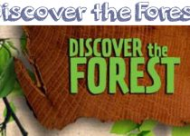 Get Into the Woods! Discover the Forest