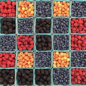 How to Pick and Store the Freshest Summer Fruit
