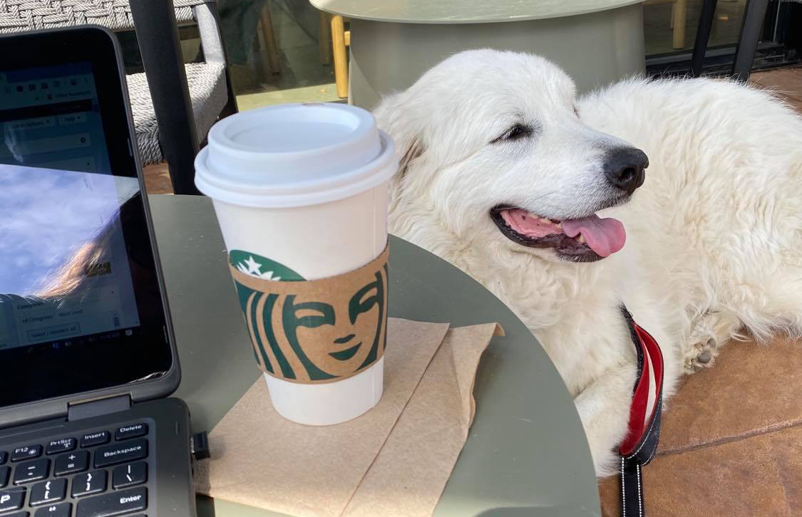 working with Sparky at Starbucks