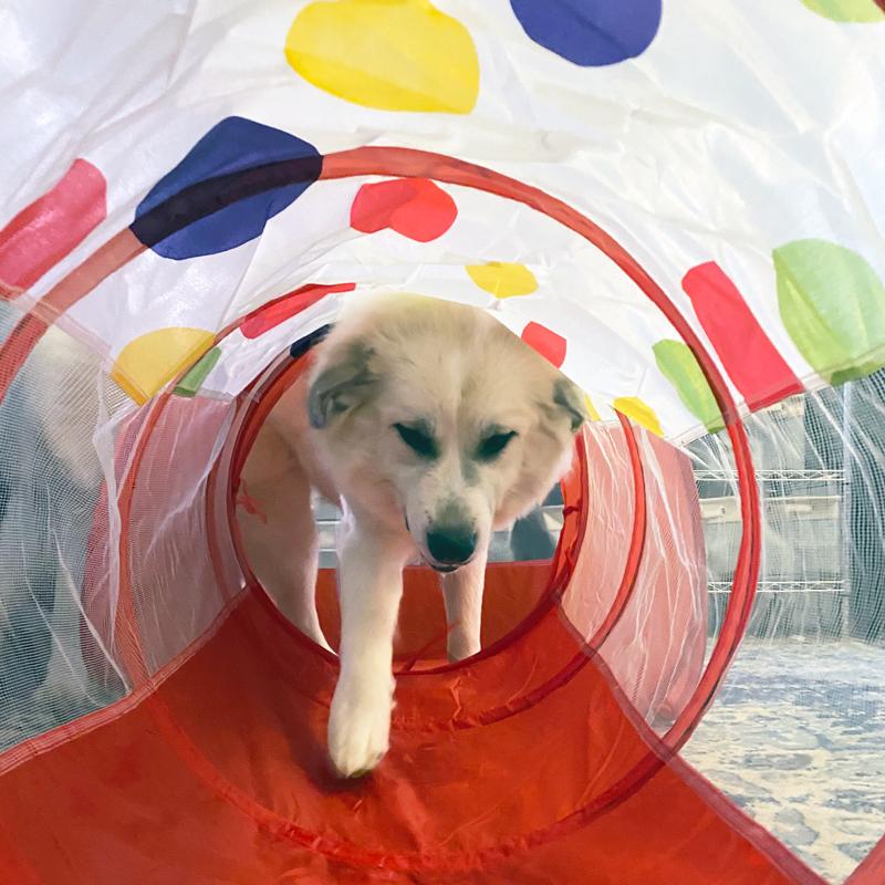 dog crawling through a tunnel